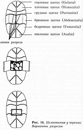 целиотомия-черепах