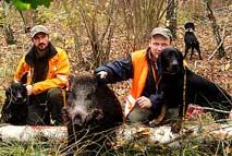 Собаки-для-охоты