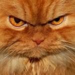 как гипнотизировать кошку