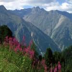 растительность альп фото