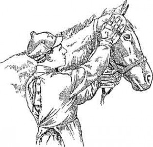 рис.13 Чистка головы лошади