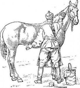 чистка-лошади