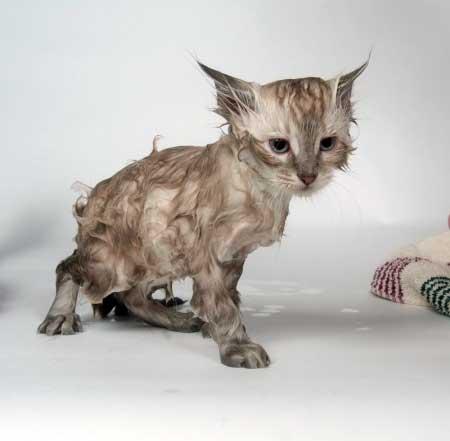 Как помыть котика