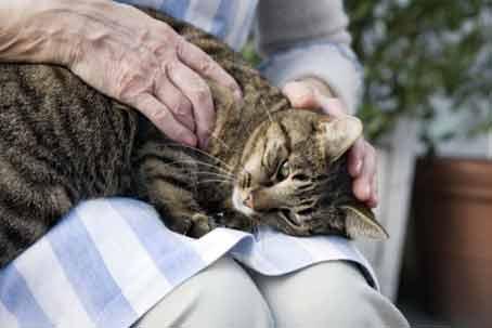 эвтаназия-кота
