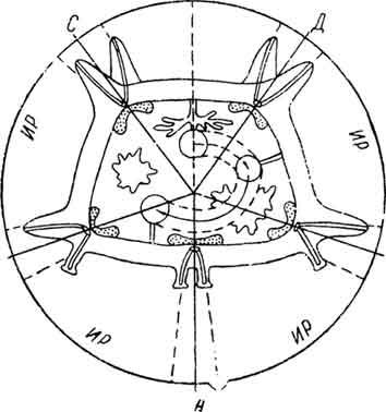 бивиум-трепанга