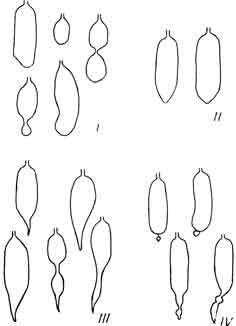 формы