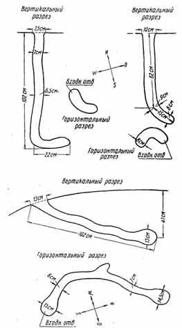 Рис. 22. Схемы нор рыжеватого суслика. По зарисовкам на месте Е. Павловой и В. Смешновой