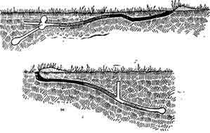 Рис. 6. Норы суслика-песчаника в период спячки грызуна (масштаб 1x100). По В. К. Тимофееву